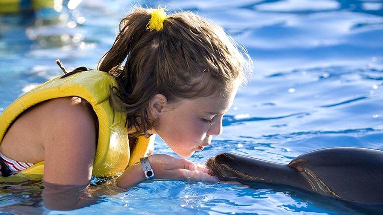 السباحة مع الدولفين